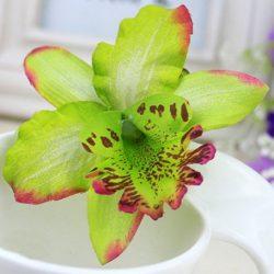 hårblomma grön orkidé
