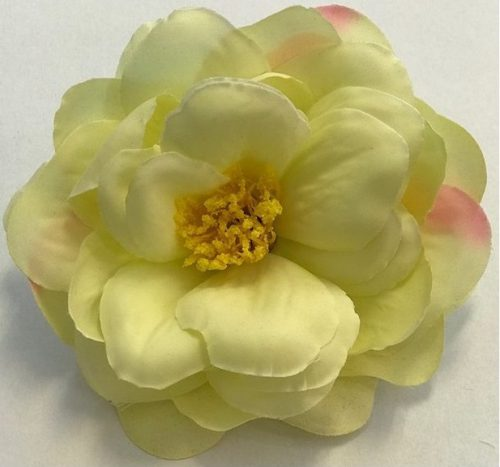 Hårblomma gul