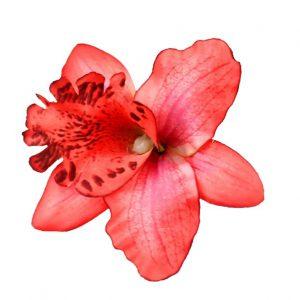 Orkidé hårblomma