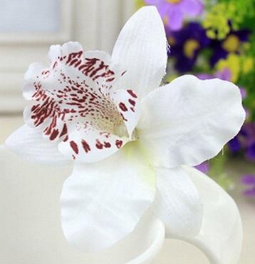 vit hårblomma orkide